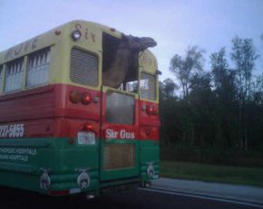 Camels take the bus now?? Picture